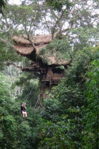 Gibbon experience in Laos