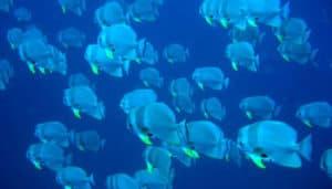 diving-big-6
