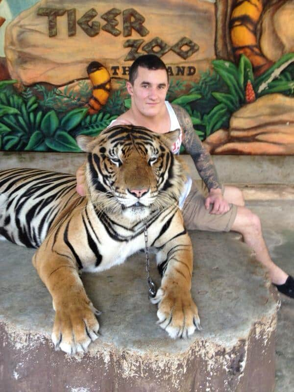 A tourist posing for a picture in Thailand's Tiger Temples with the tiger that has been de-clawed and looks very sleepy.