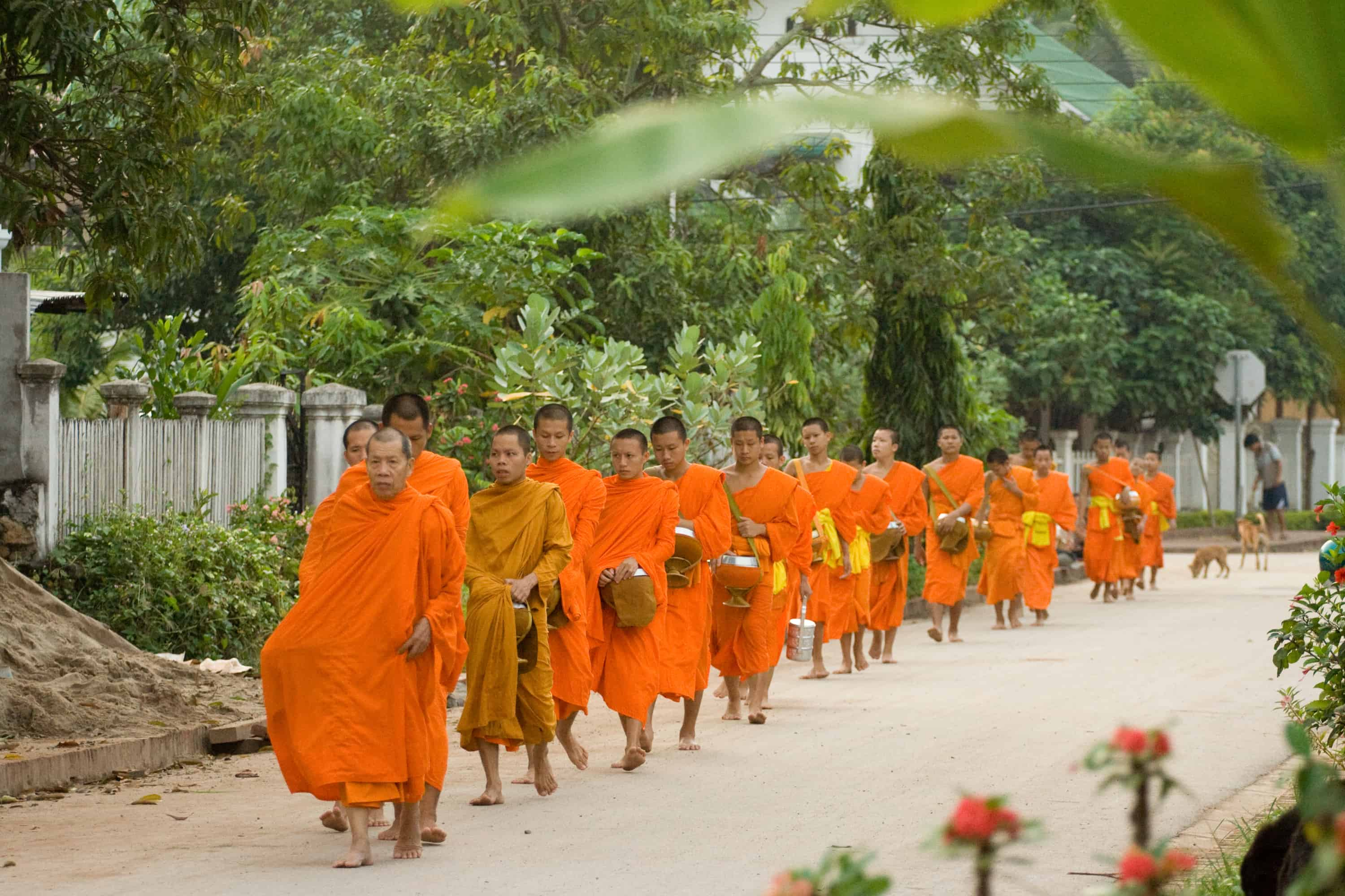 Experience Buddhism in Chiang Mai with food donations to monks in the morning