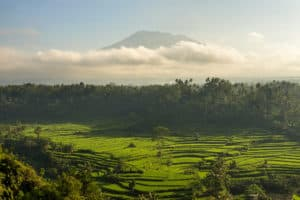 Mahagiri-Rice paddy-morning 1