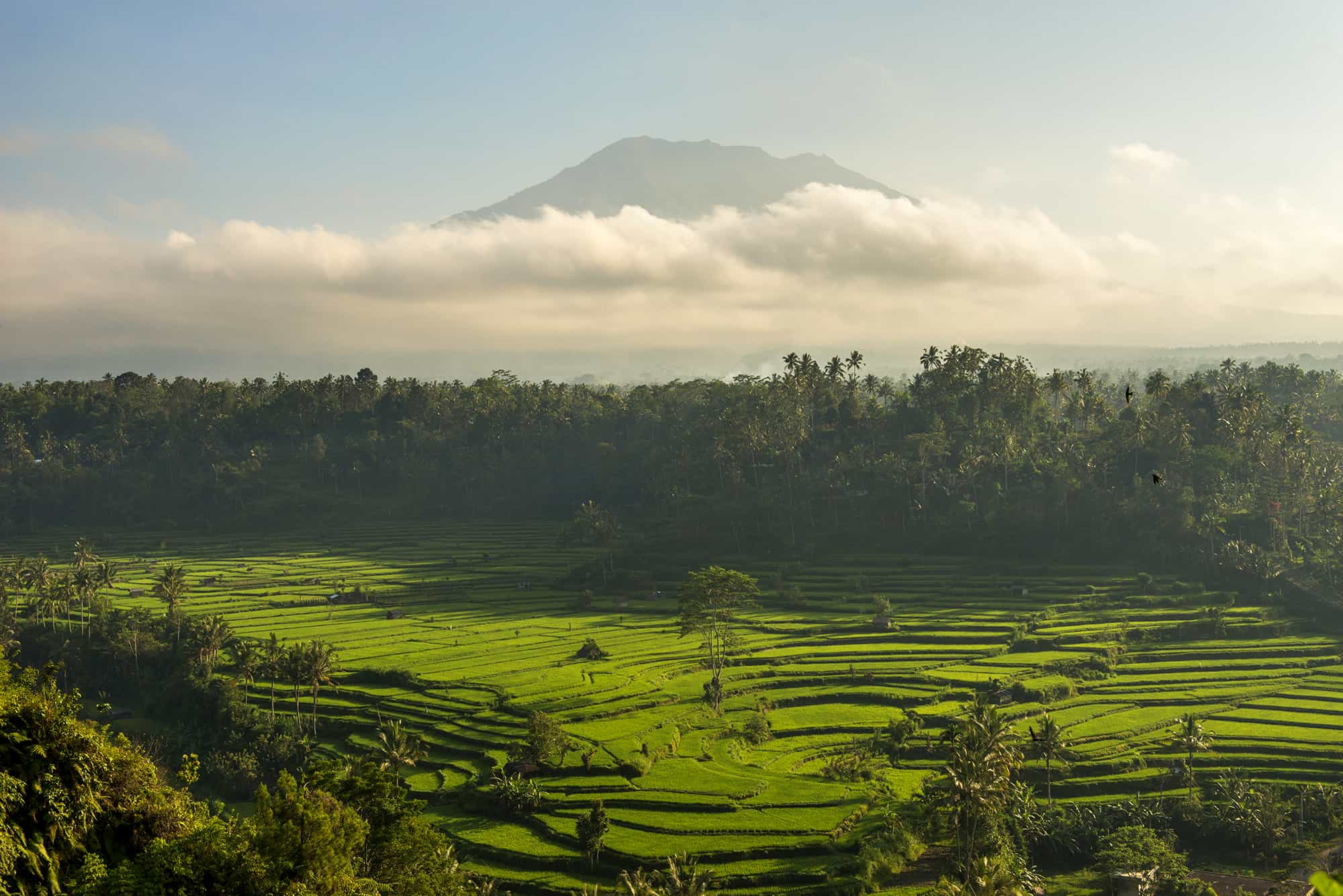 Mahagiri Rice paddy in the morning with clouds covering the base of a hill in the distance