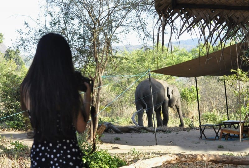 Visiting Elephant