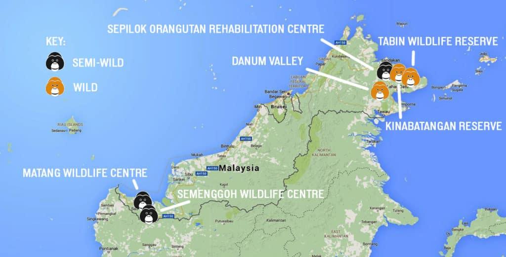 Orangutan locations copy