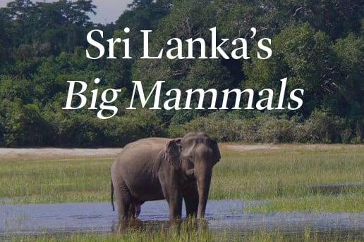 Sri Lanka's Big Mammals