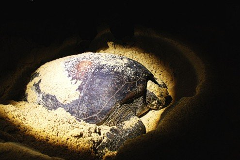 Turtle-in-the-light-1024x682 CROP