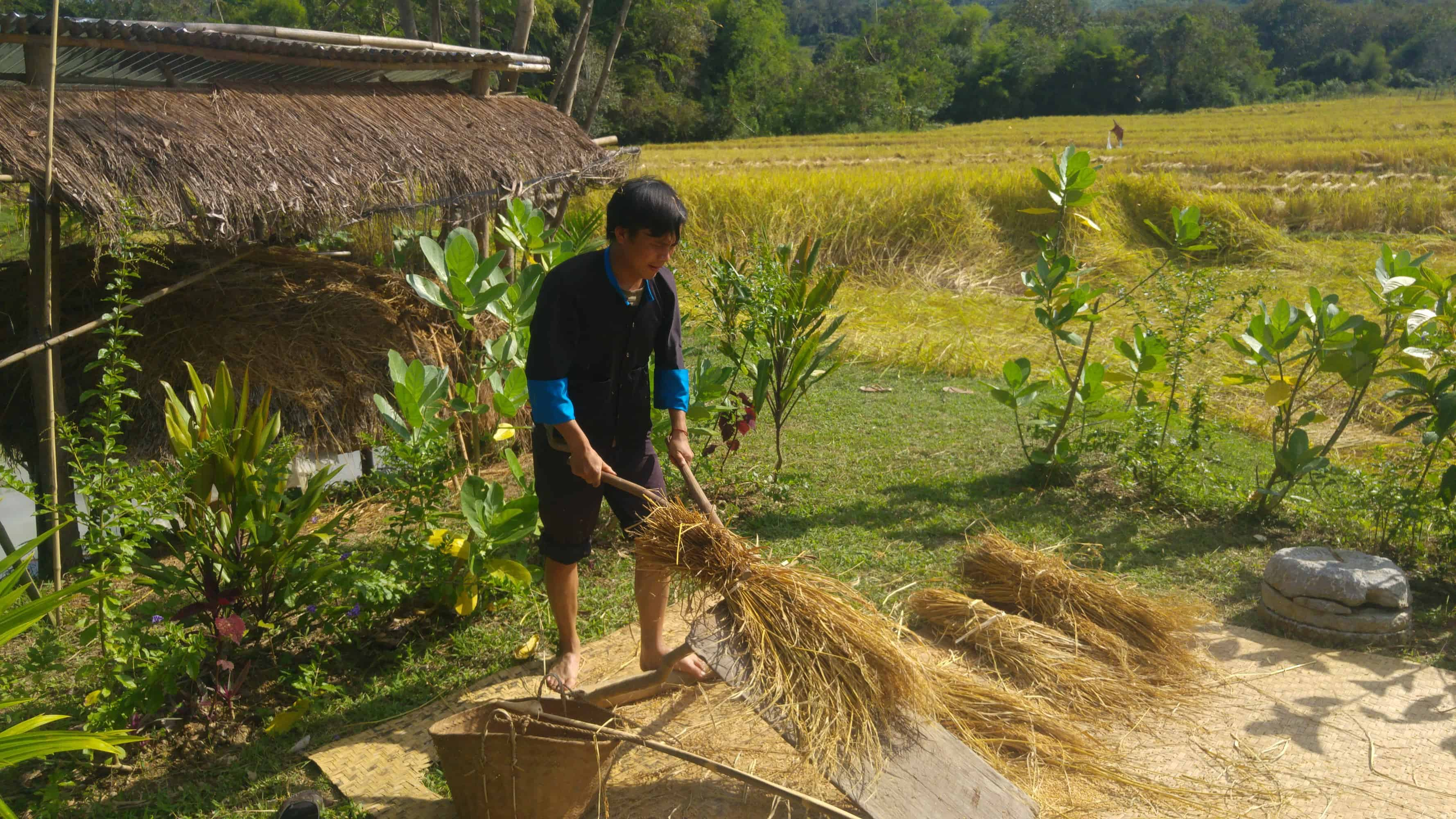 Rice Farming in the Living Land Farm in a rural part of Laos