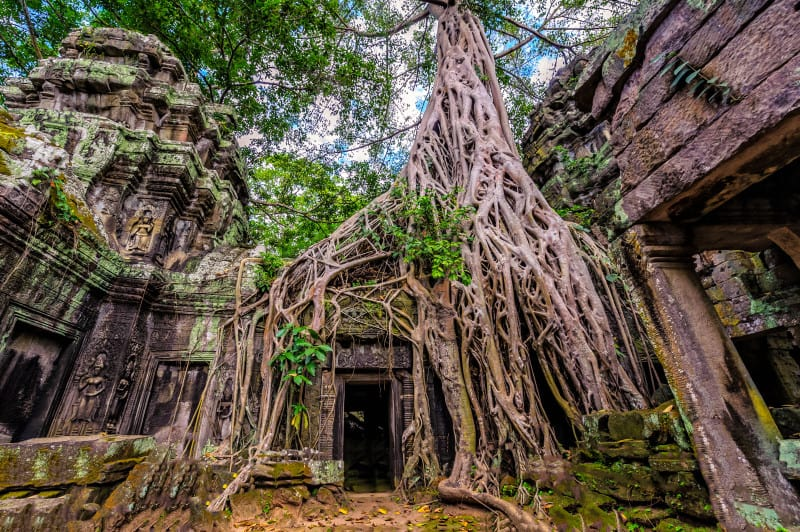 Panorama of ancient stone door and tree roots, Ta Prohm temple ruins, Angkor, Cambodia
