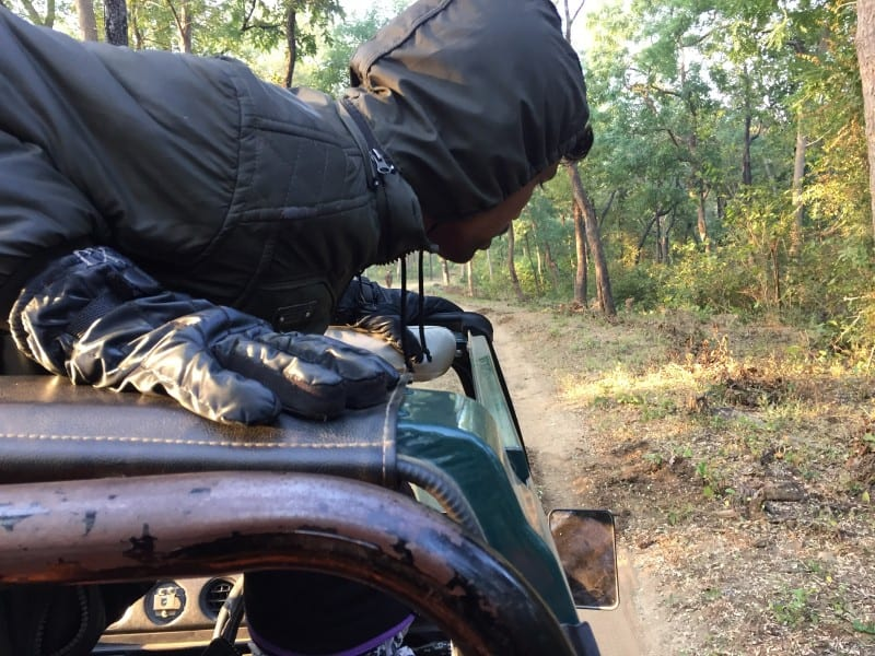 Spotting wildlife in Satpura