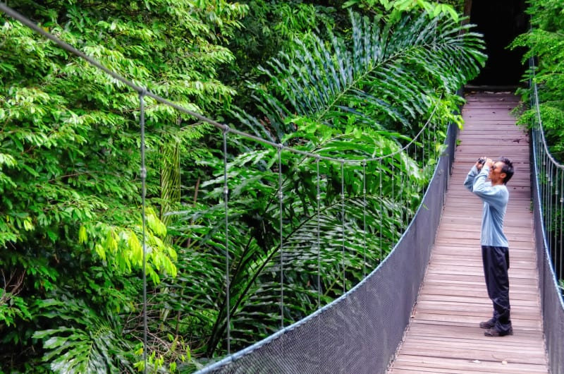 Man on canopy walkway in Danum Valley which is safe to travel to