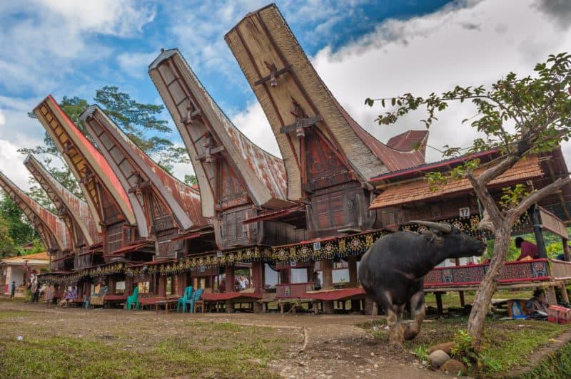Buffalo's horn shaped traditional houses of Tana Toraja in Sulawesi