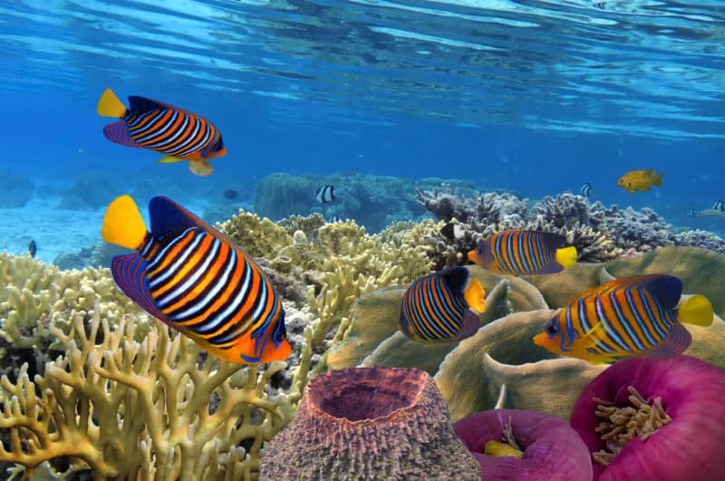 colourful fishes can be found when snorkelling on the North Sulawesi Island, Indonesia