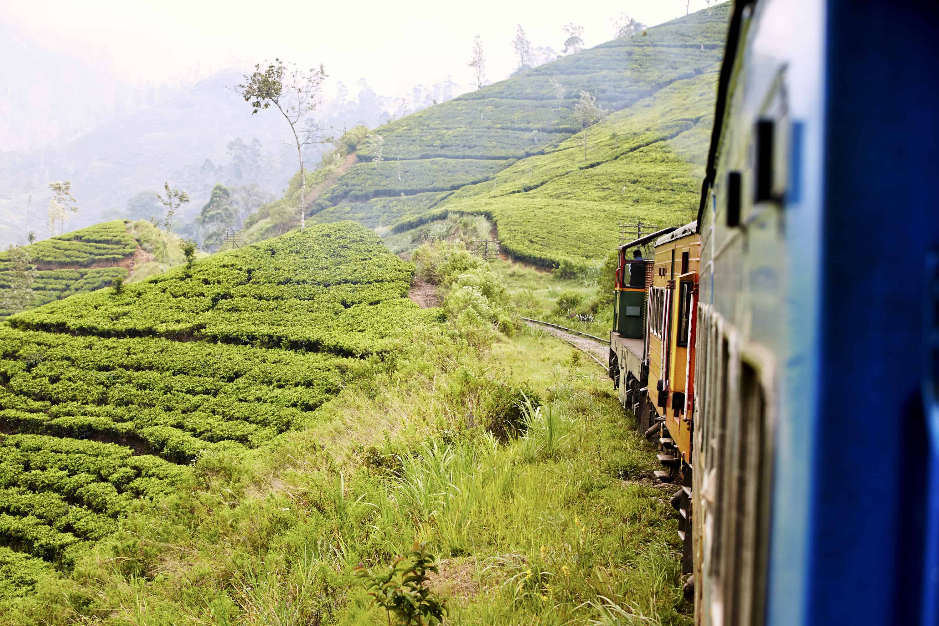 Train travelling through tea plantations in the hill country of Sri Lanka