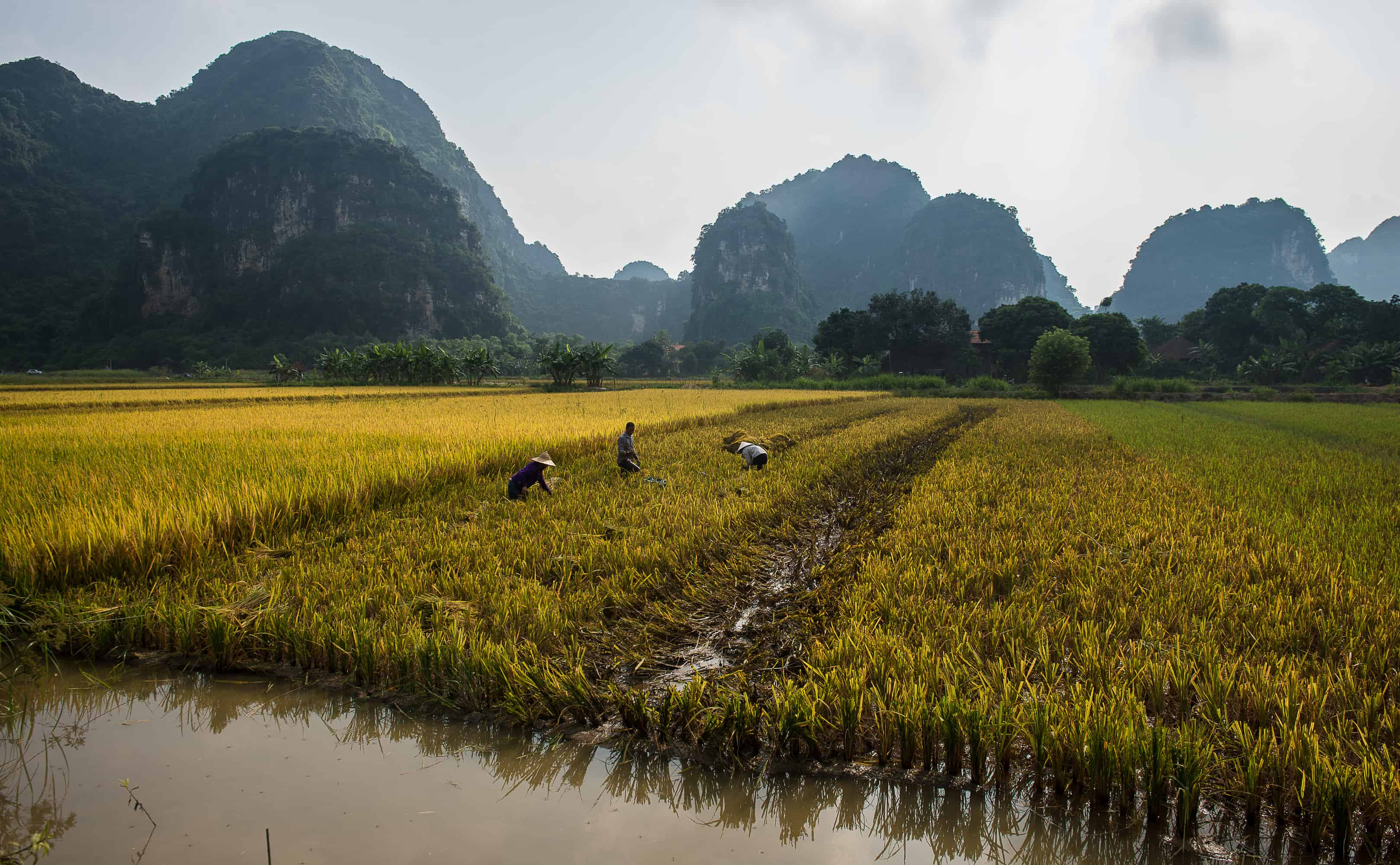 Trang An Ecosystem in Ninh Binh, an alternative water based experience to Halong Bay
