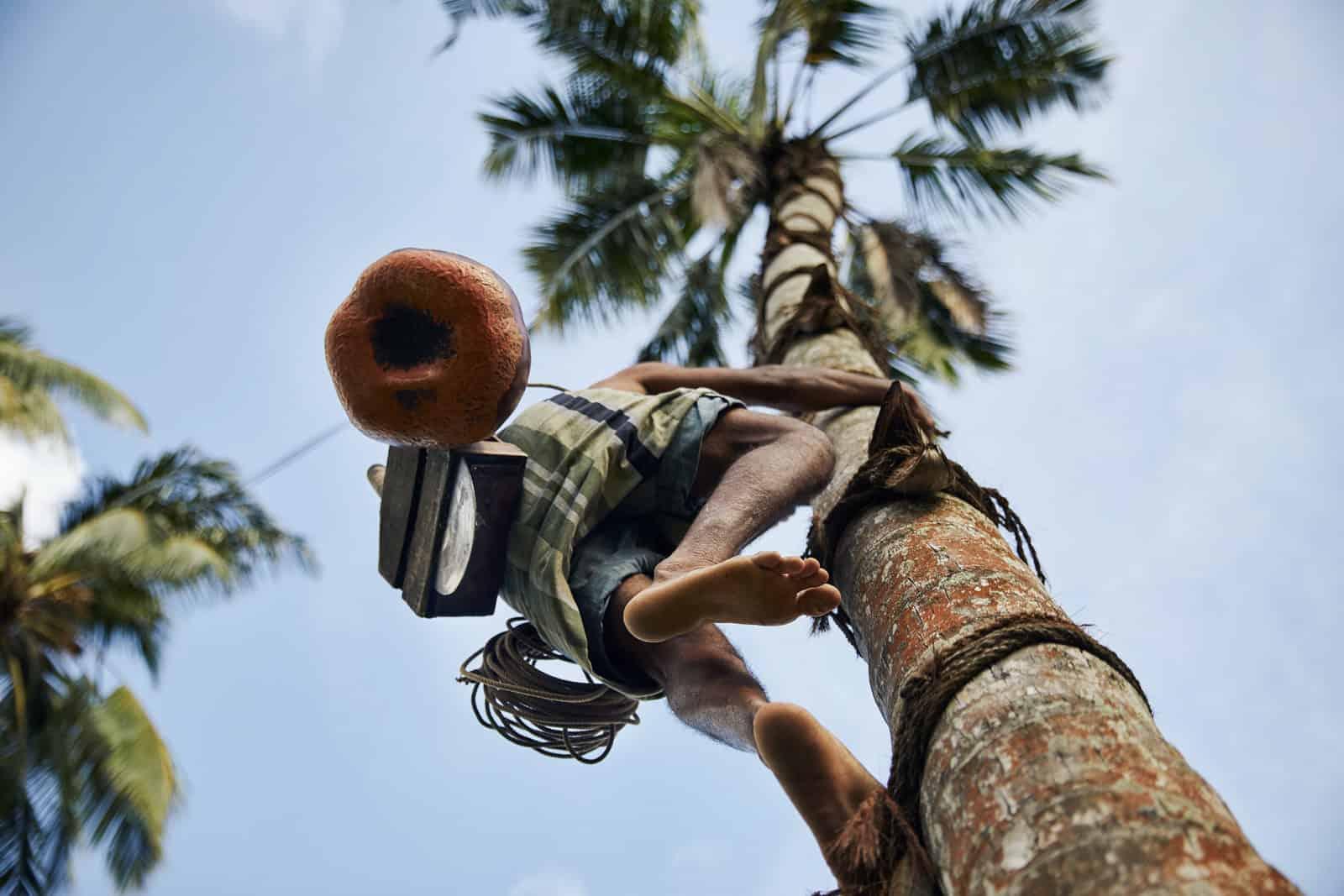 Planning a trip to Sri Lanka | Toddy Tapper