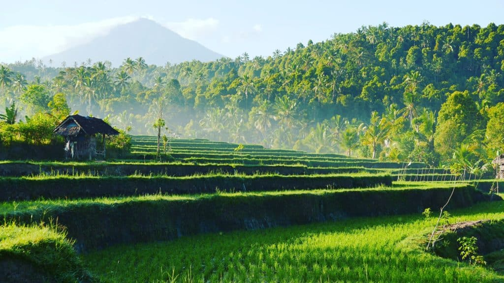 Green rice terraces and forests of Munduk with Mount Agung in the background