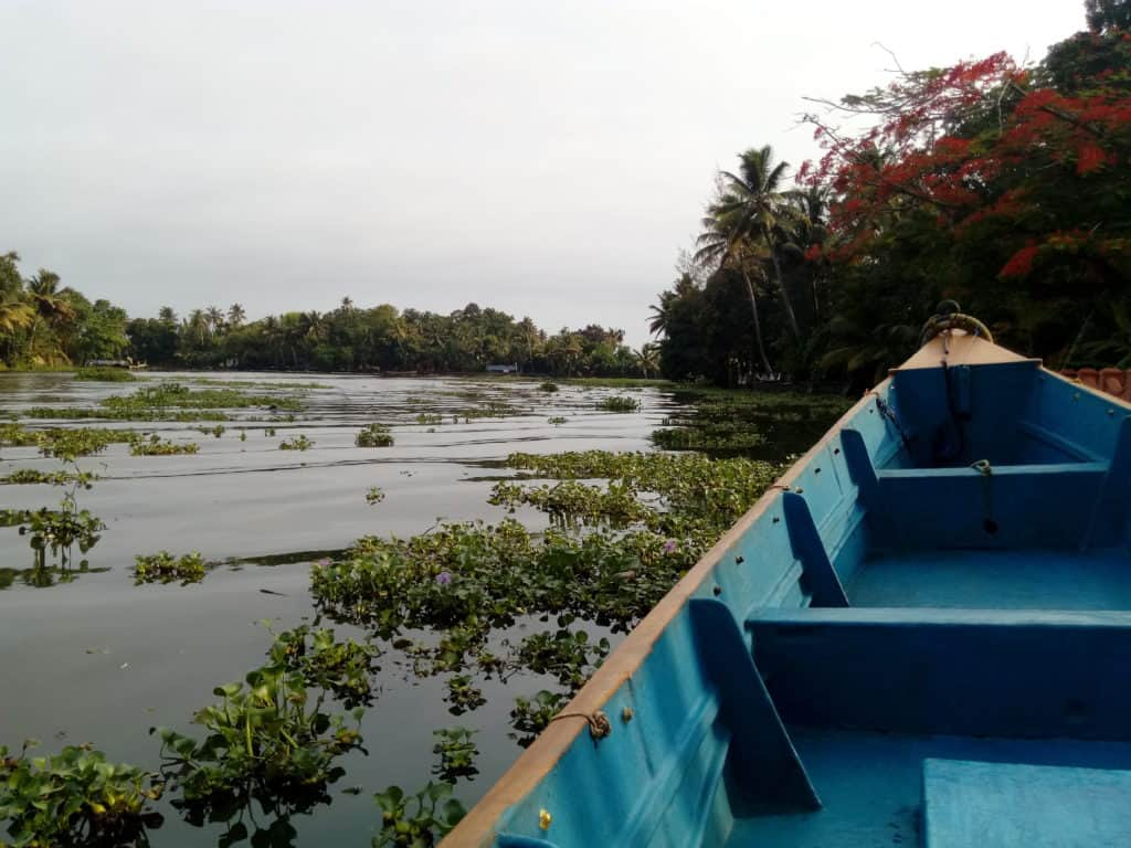 Deep into the narrower channels of the backwaters on a small boat where you get to experience the life of the backwaters