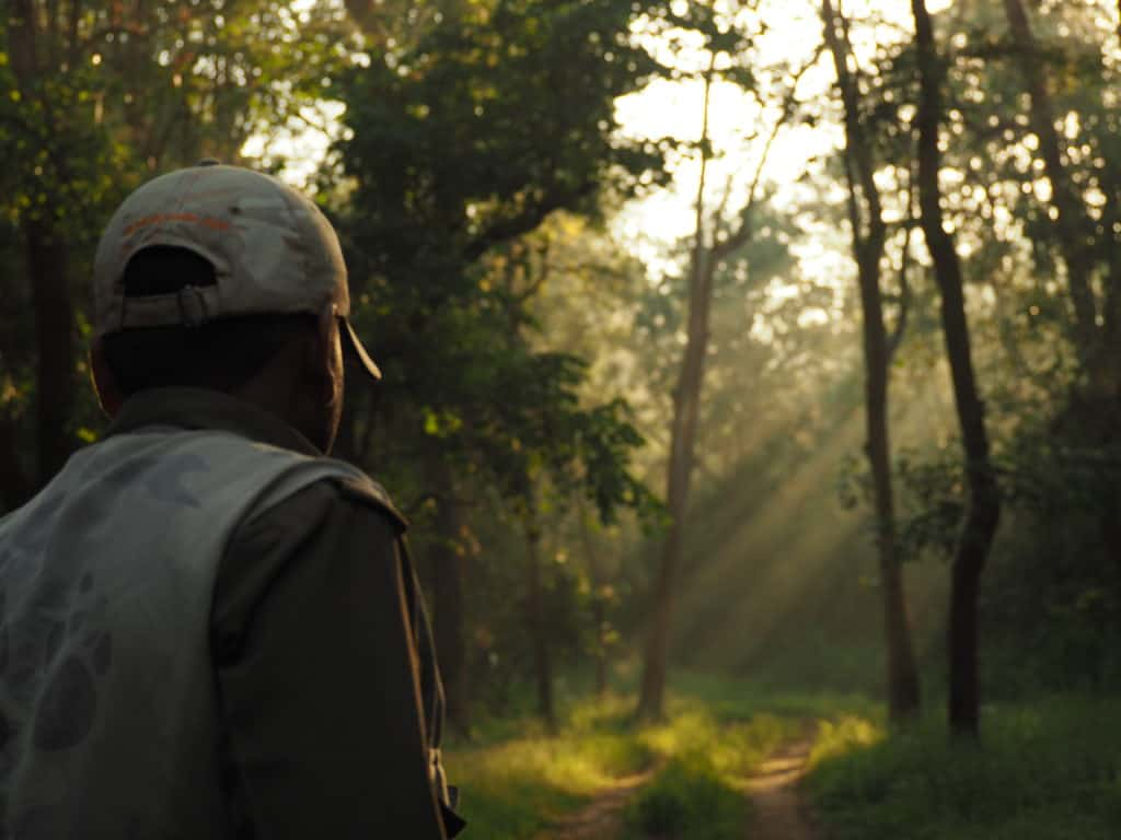 Leopard tracking in Kanha national park