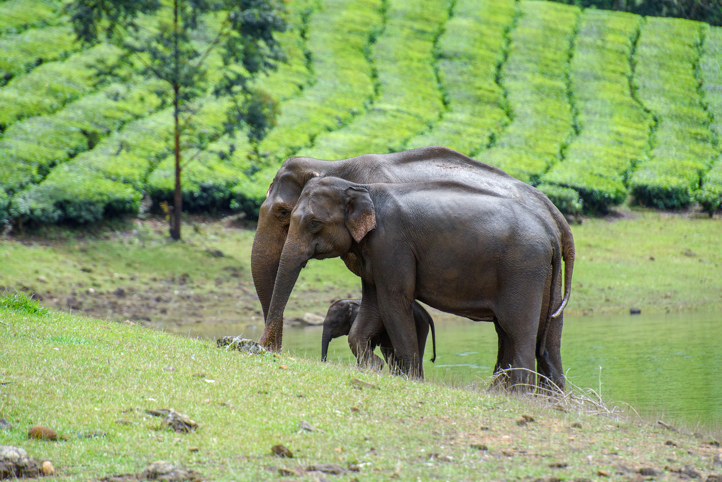 Best places to see elephants with your family in India