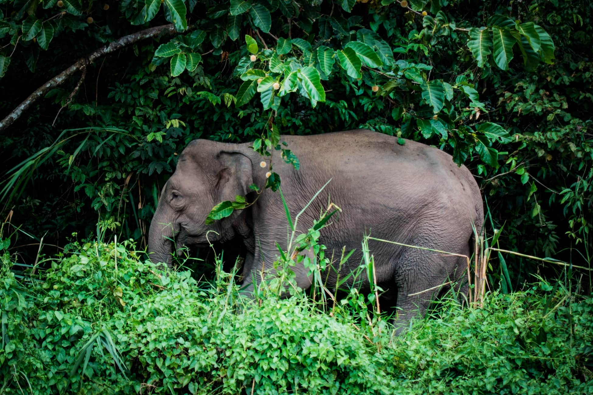 Ethical elephant experiences in Asia