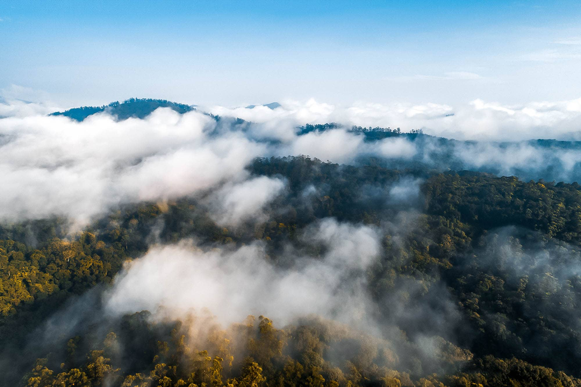 Clouds above the forest in Periyar National Park, Kerala