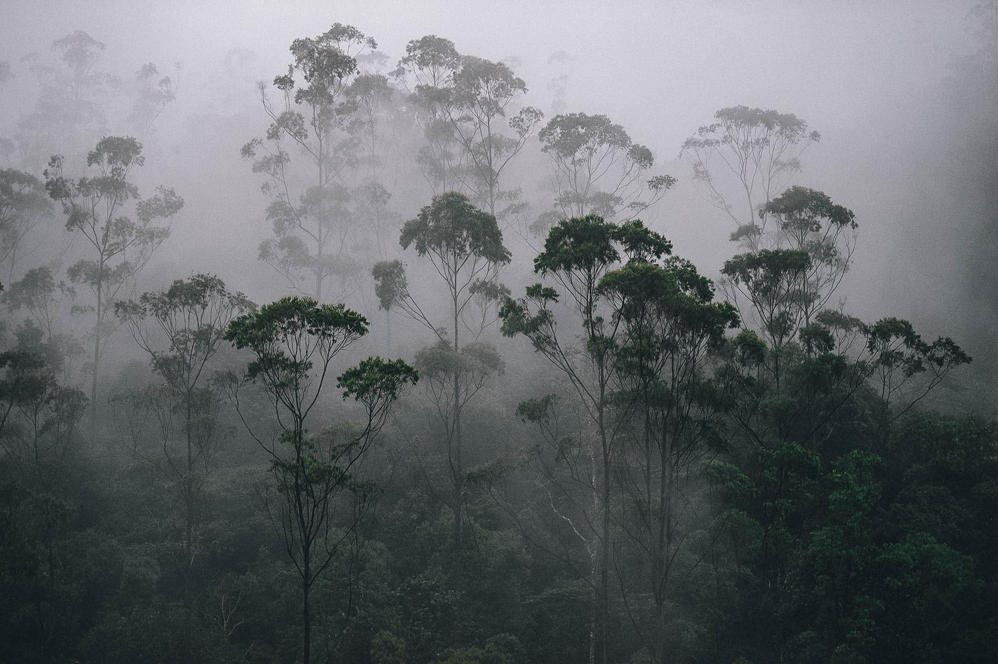 Misty rainy weather in the heart of Periyar National Park, Kerala