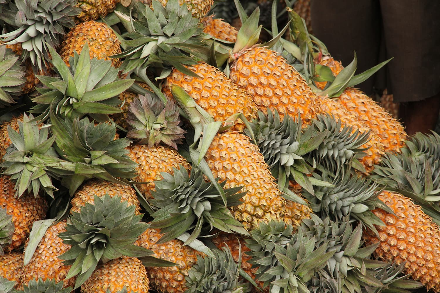 Pineapples stacked up in a market in Sri Lanka