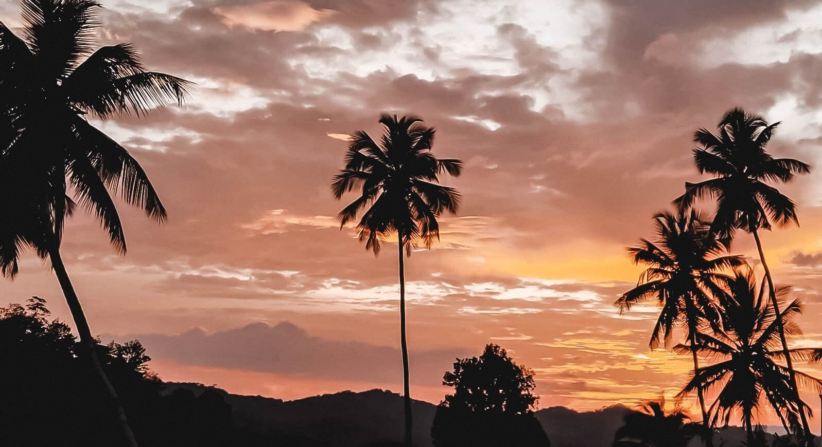 Palm trees at sunset in Sri Lanka