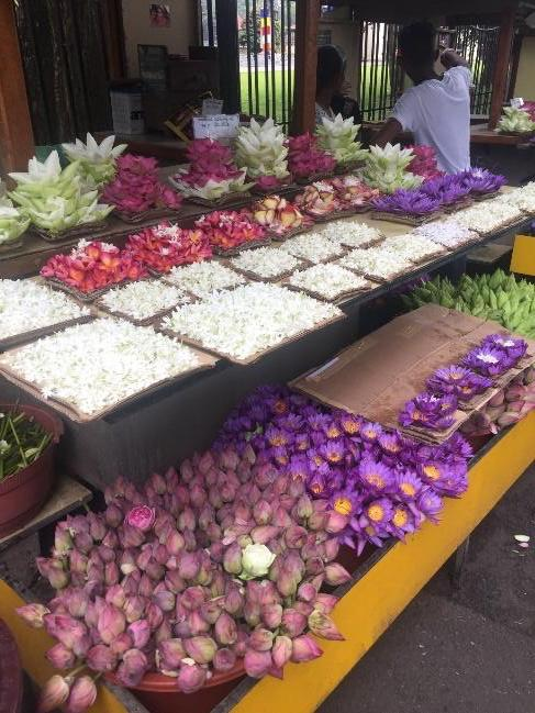 Lotus Flowers in Sri Lankan market