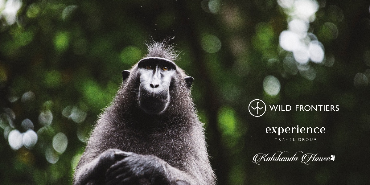 Black crested macaque with logos for Wild Frontiers, Experience Travel Group and Kalukanda House