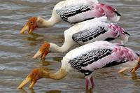 Sri Lanka's Birds