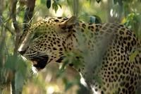 Wild Sri Lanka - 16 days