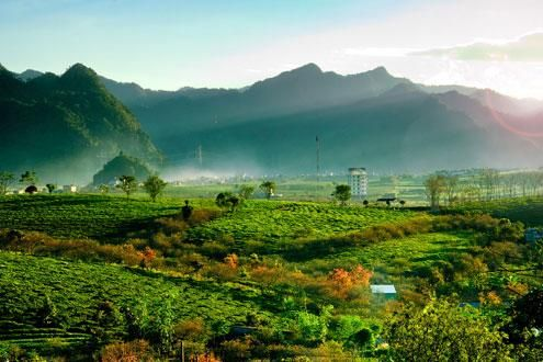 Munnar - A Day in the Tea Lands