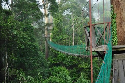 Danum Valley Trekking