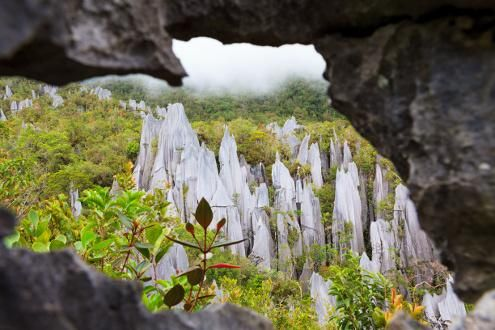 Mulu Pinnacles Trek