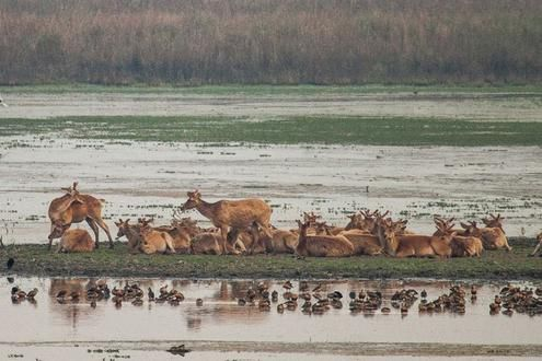 Safaris in Dudhwa National Park