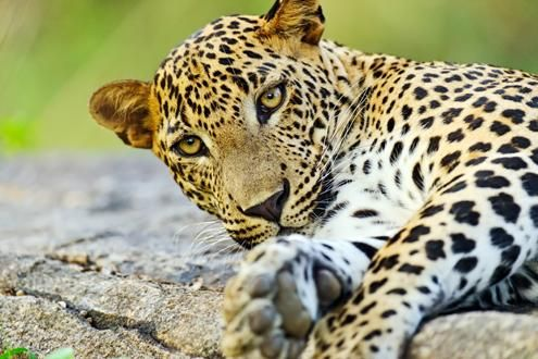 Wild Sri Lanka: bespoke holiday itinerary