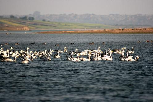 Temples, Ghats & Wildlife in the Chambal Valley