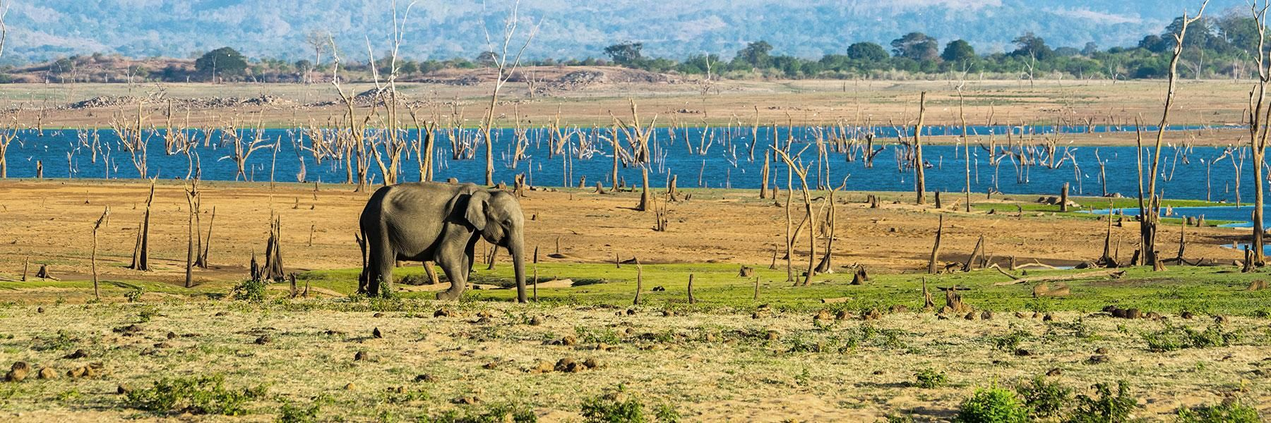 Why Visit Udawalawe National Park?