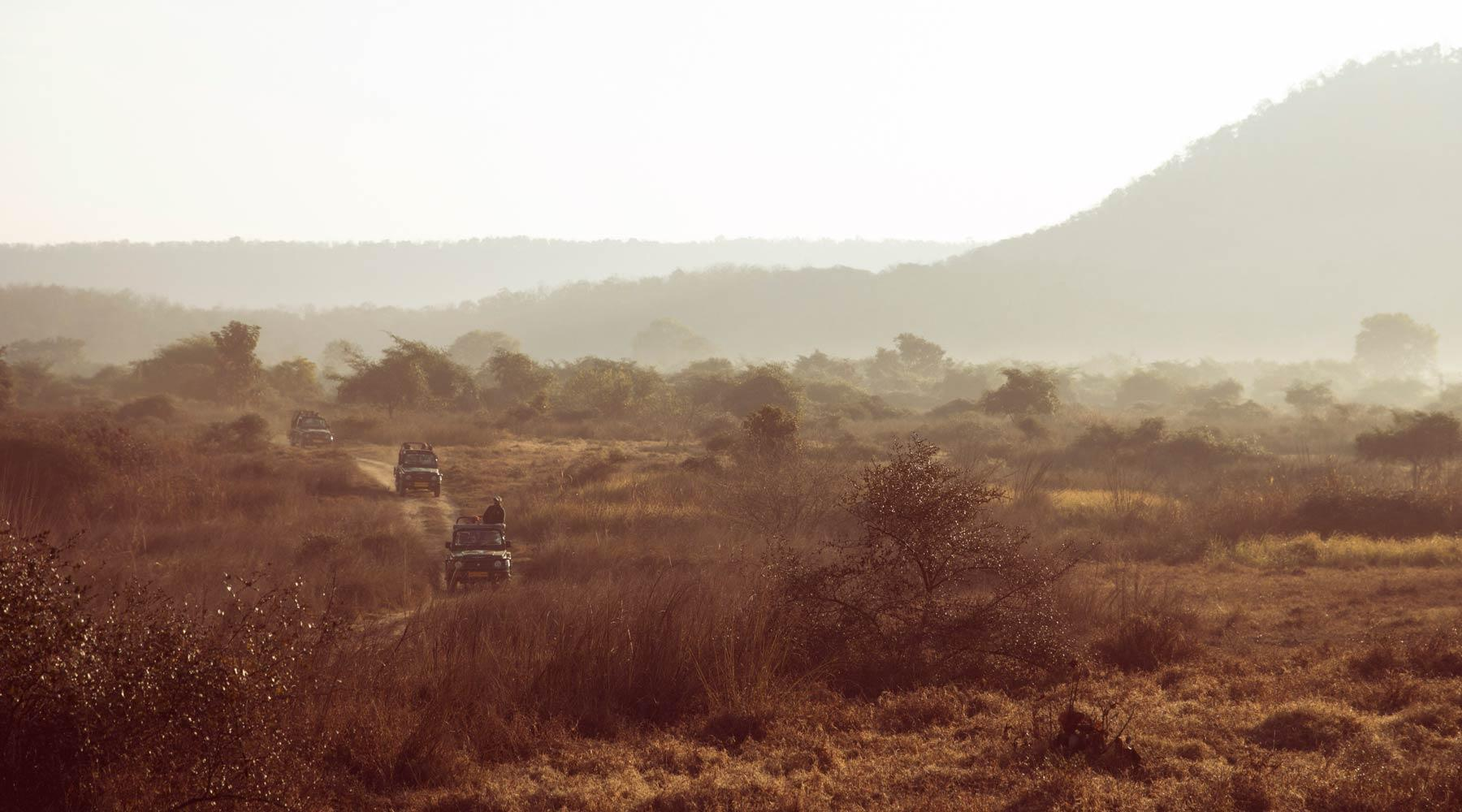 Safaris & Wildlife Experiences