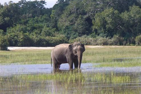 Sri Lanka's Big Mammals