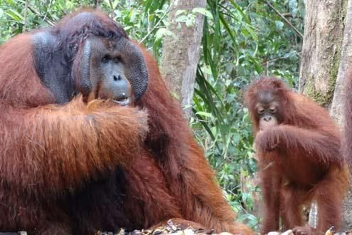 Java in Depth with Borneo Rainforest Adventure
