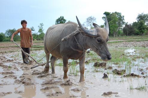 Laos to Thailand via The Mekong
