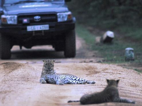Kulu Safaris Leopard Jeep