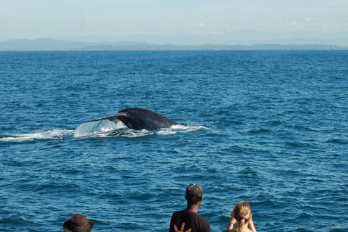 Whale watching, Mirissa