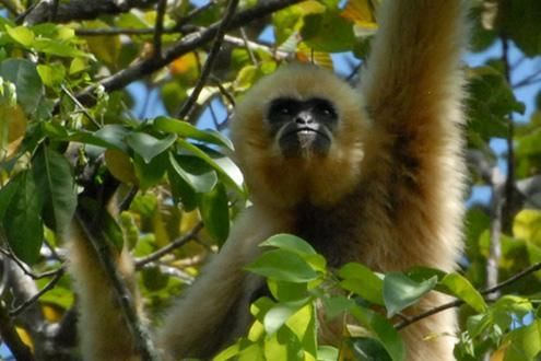 Gibbon Spotting 3 Days/2 Nights Trek