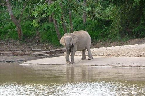 Kinabatangan Wildlife Safari