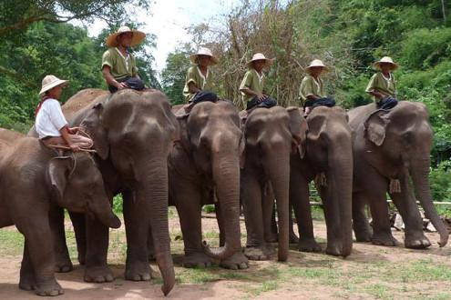 Green Hill Elephant Camp
