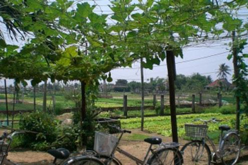 Tra Que Herb Village cycling