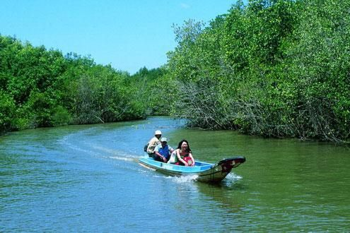 Can Gio Mangrove by Speedboat